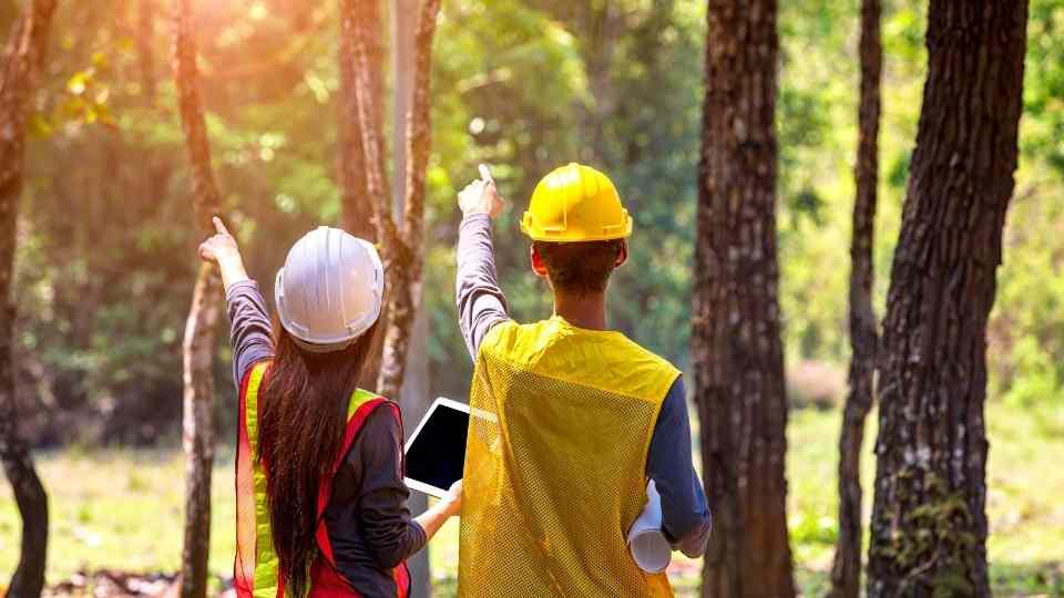 dois engenheiros apontando para árvores